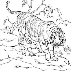 Sumatran Tiger Climb Down Into The Village Coloring Page