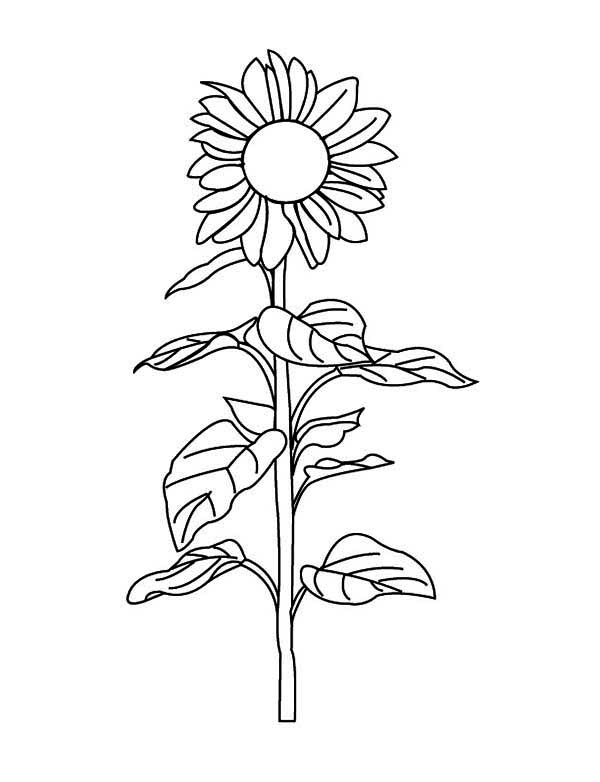 Sunflower Amazing Coloring Page Download Amp Print Online
