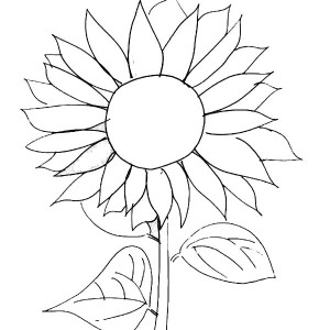 Sunflower Picture Coloring Page