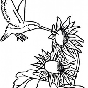 Sunflower And Hummingbird Coloring Page