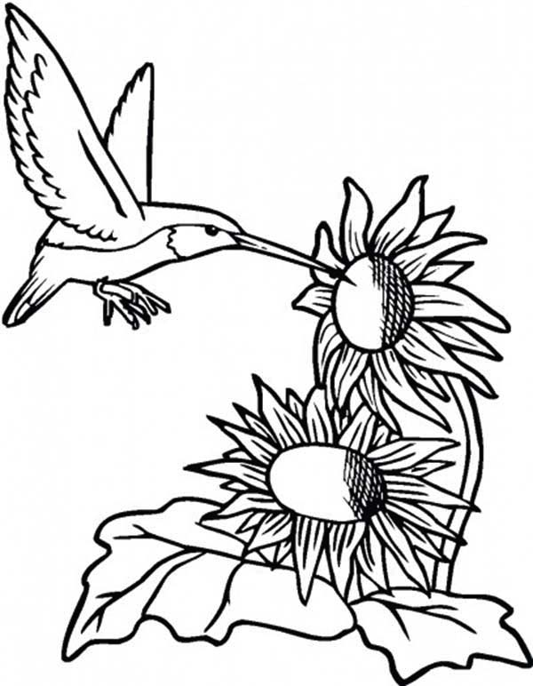 Sunflower And Hummingbird Coloring