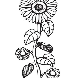 Sunflower Is So Beautiful Coloring Page