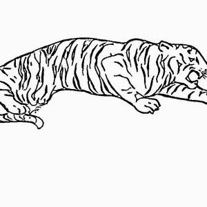 This Angry Tiger Is Ready To Pounce Its Prey Coloring Page