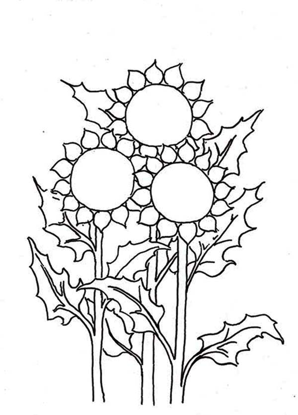 Three Sunflower Coloring Page Download Print Online