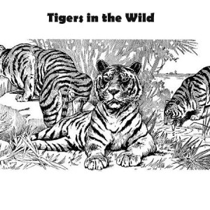 Three Tigers And Its Pact Coloring Page
