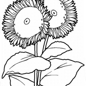 Two Big Sunflower Coloring Page