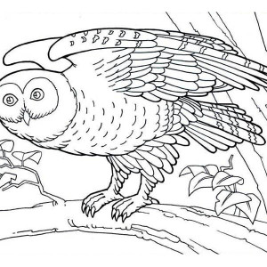 Detailed Owl Coloring Page