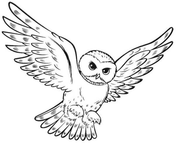 Owl Hunting For Food Coloring Page - Download & Print ...