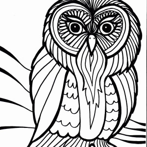 Owl Outline Art Coloring Page