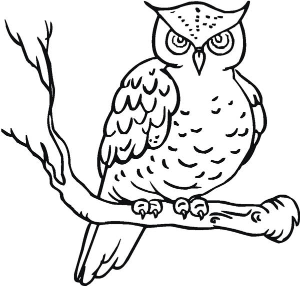 Owl Yawn Coloring Page Download Amp Print Online Coloring