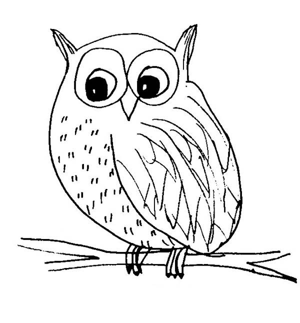 Snow Owl Sketch Coloring Page Download Print Online