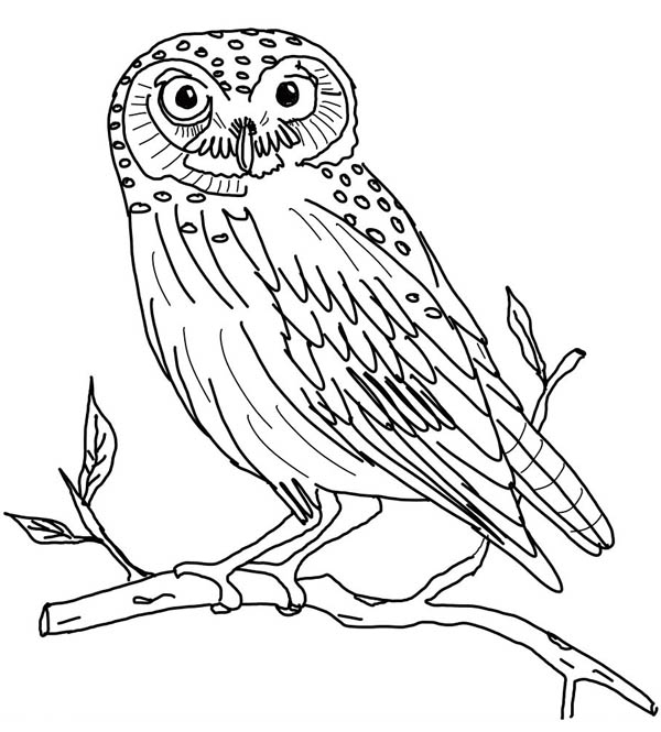 The Little Owl Coloring Page - Download & Print Online ...