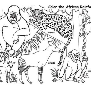 African Rainforest Animals Coloring Page
