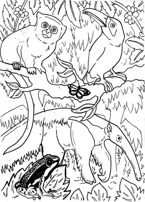 brazil rainforest animals coloring page coloring pages