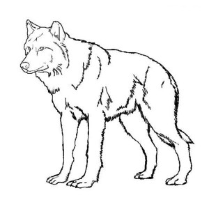 Amazing Wolf Coloring Page
