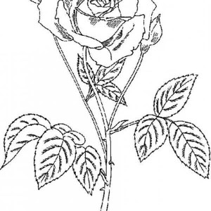 Amazingly Beautiful Rose Coloring Page