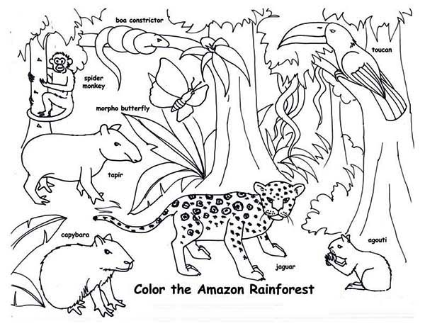 Amazon Rainforest Animals Coloring Page Download Print Online - Amazon-coloring-pages