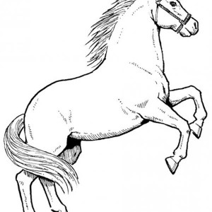 Awesome Male Horse In Horses Coloring Page