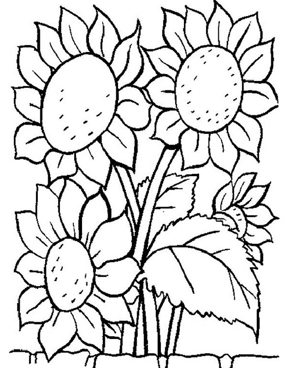 - Awesome Sun Flower Coloring Page - Download & Print Online Coloring Pages  For Free Color Nimbus