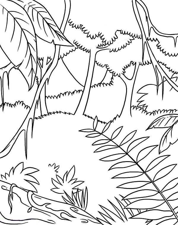 Awesome Tropic Rainforest Coloring Page - Download & Print ...