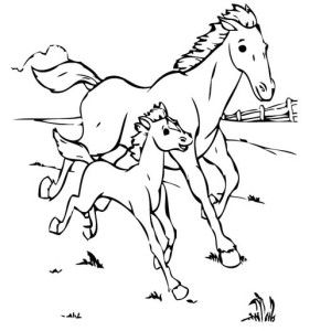 Baby Horse Running With His Mother In Horses Coloring Page