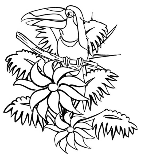 - Beautiful Hornbill Rainforest Coloring Page - Download & Print Online Coloring  Pages For Free Color Nimbus