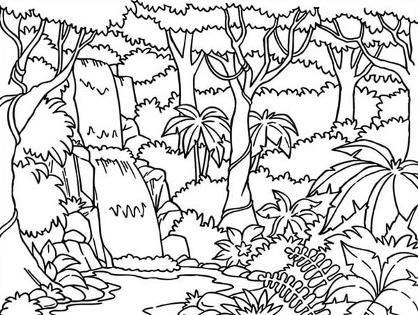 Beautiful Rainforest Coloring Page Download Print Online
