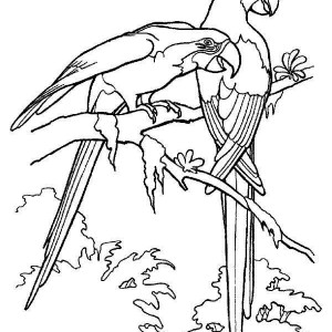 Beautiful Rainforest Parrot Coloring Page