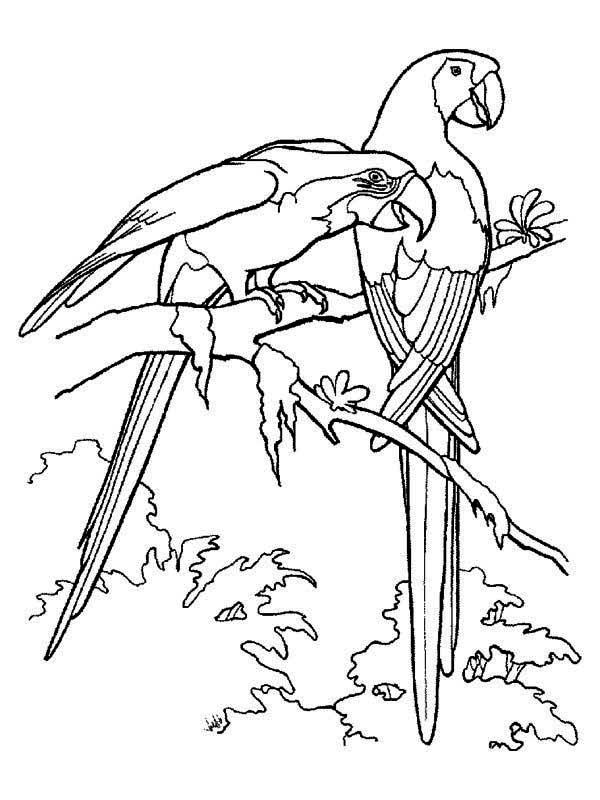 free coloring pages tropical birds - photo#36