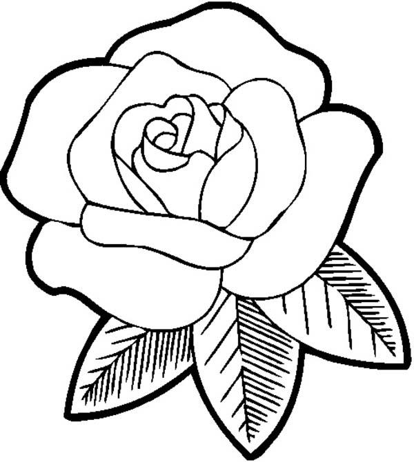 Big Beautiful Rose Coloring Page