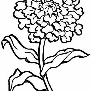 Blooming Flower Coloring Page