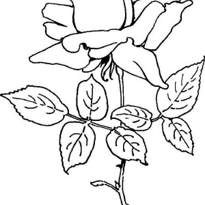 Blooming Rose Coloring Page