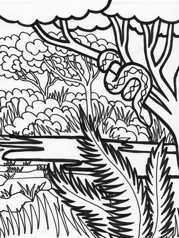 Boa Snake Rainforest Animal Coloring Page Download