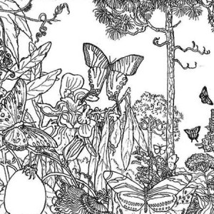 Butterfly Rainforest Insect Coloring Page