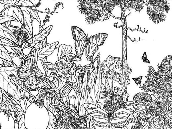- Butterfly Rainforest Insect Coloring Page - Download & Print Online Coloring  Pages For Free Color Nimbus