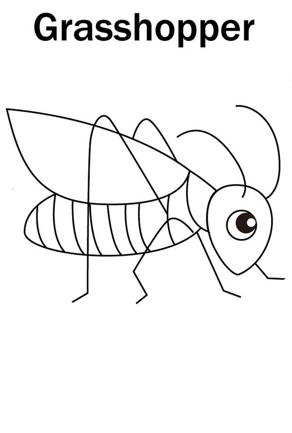 Cute Little Grasshopper Coloring Page - Download & Print ...