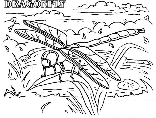 Dragonfly Rainforest Insect Animals Coloring Page - Download & Print ...