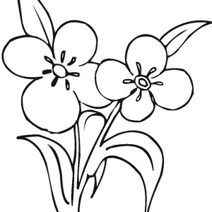 Flower Growing And Blooming Coloring Page