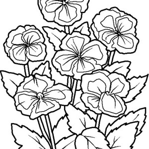 Flower Picture Coloring Page