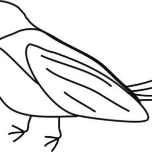 Garden Robin Coloring Page