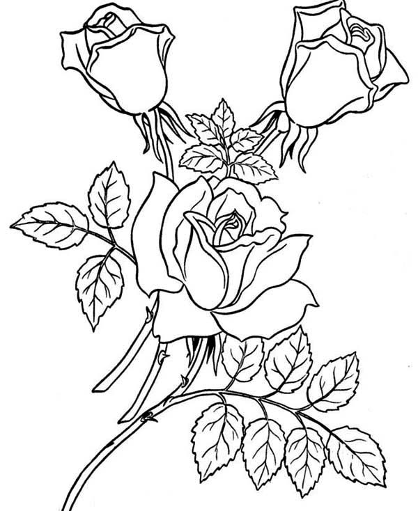 Garden Of Rose Coloring Page - Download & Print Online ...