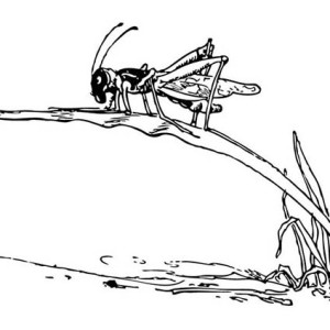 Grasshopper Climbing Grass Coloring Page