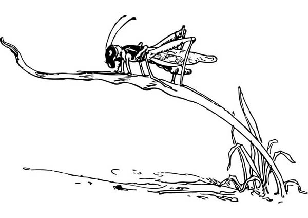 Grasshopper Climbing Grass Coloring Page - Download ...