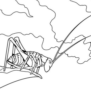 Grasshopper Jump From Cliff Coloring Page