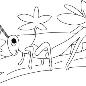 Grasshopper In The Garden Coloring Page