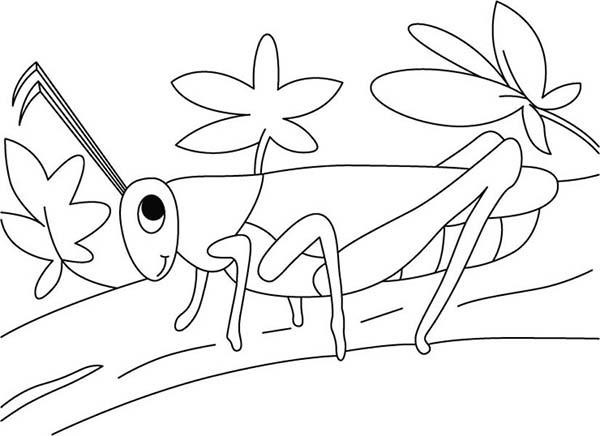 Grasshopper in the Garden Coloring