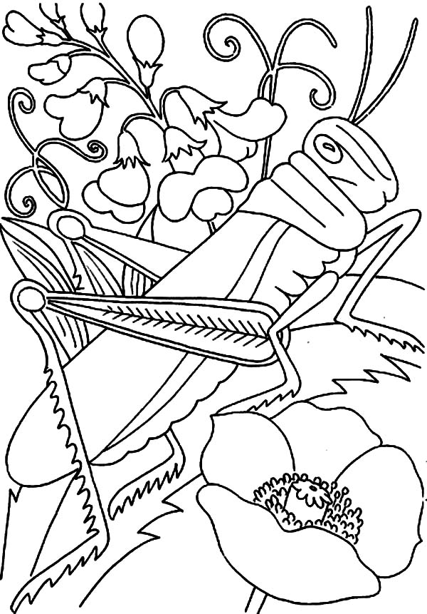 Grasshopper On The Flower Coloring Page PageFull Size