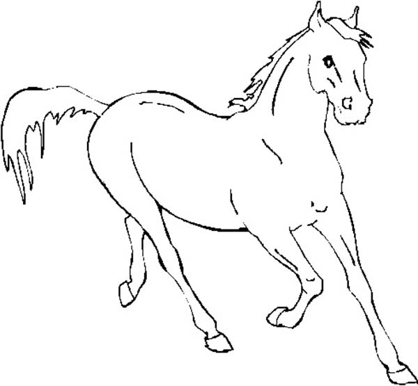 Horse Running Fast In Horses Coloring Page Download Print Online