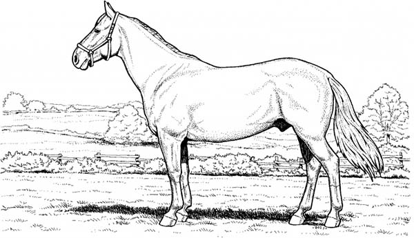 Horse In The Meadow In Horses Coloring Page Download Print