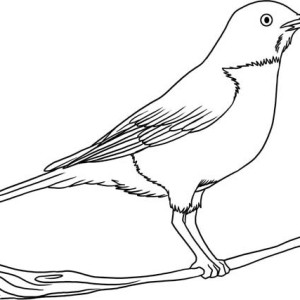 How To Draw Robin Bird Coloring Page